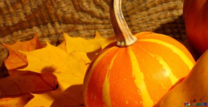 pumpkins background №35421