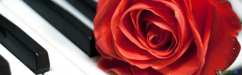 Couverture. Rosa à clefs piano. №7198