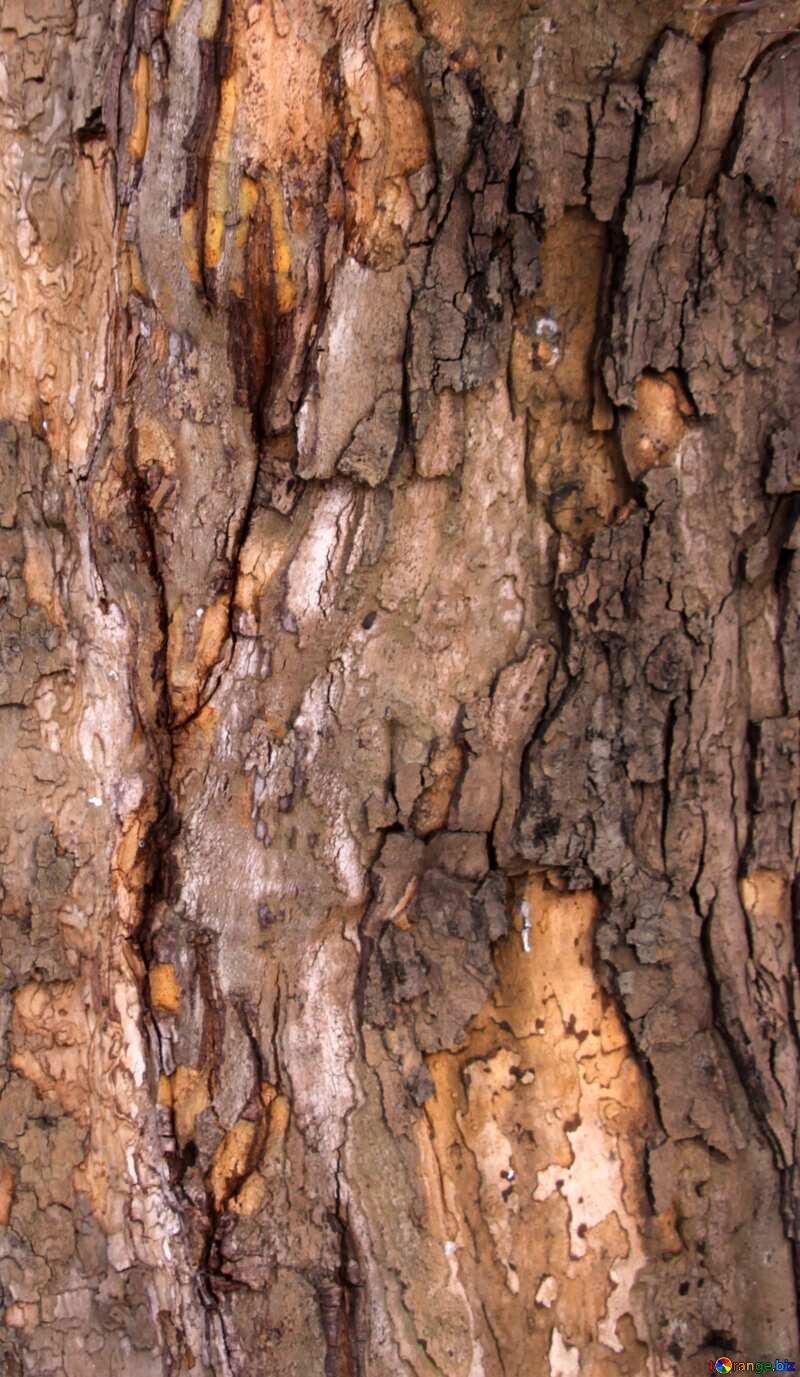 tree wood  bark №7567