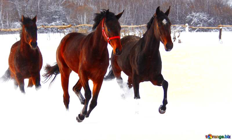 horses in the snow №3981