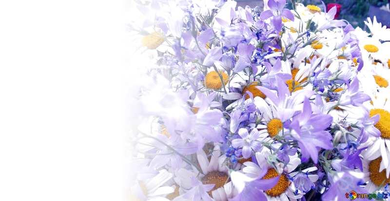 Fond modèle pour une inscription. Bouquet.  Marguerites  et  Bells. №9802