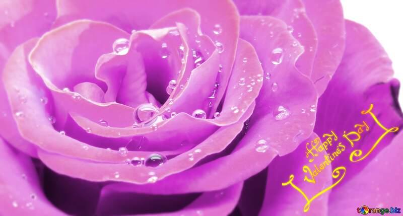 Rose flower happy valentines day pink background №17097