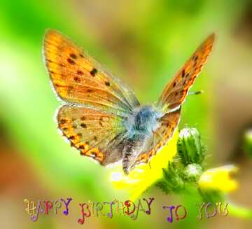 The effect of light. Very Vivid Colours. Blur frame. Fragment. Happy Birthday card.