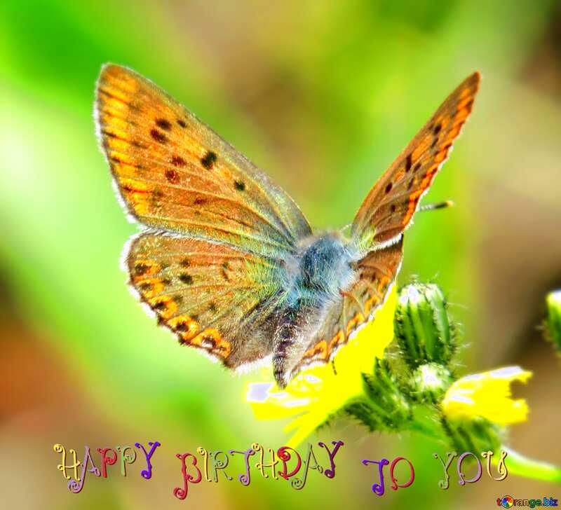 happy birthday butterfly №25913