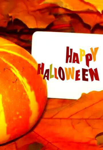 Very Vivid Colours. Fragment. Happy halloween.