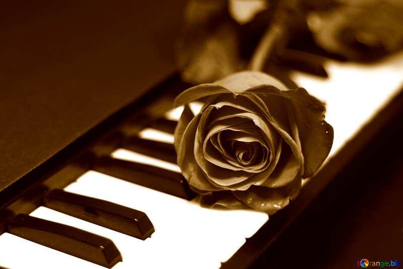 Rose  piano vintage card №7198