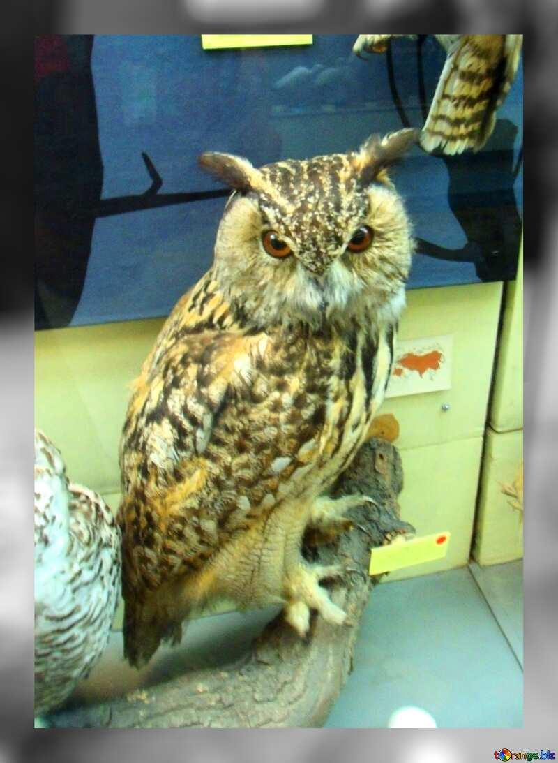 Owl stuffed №21300