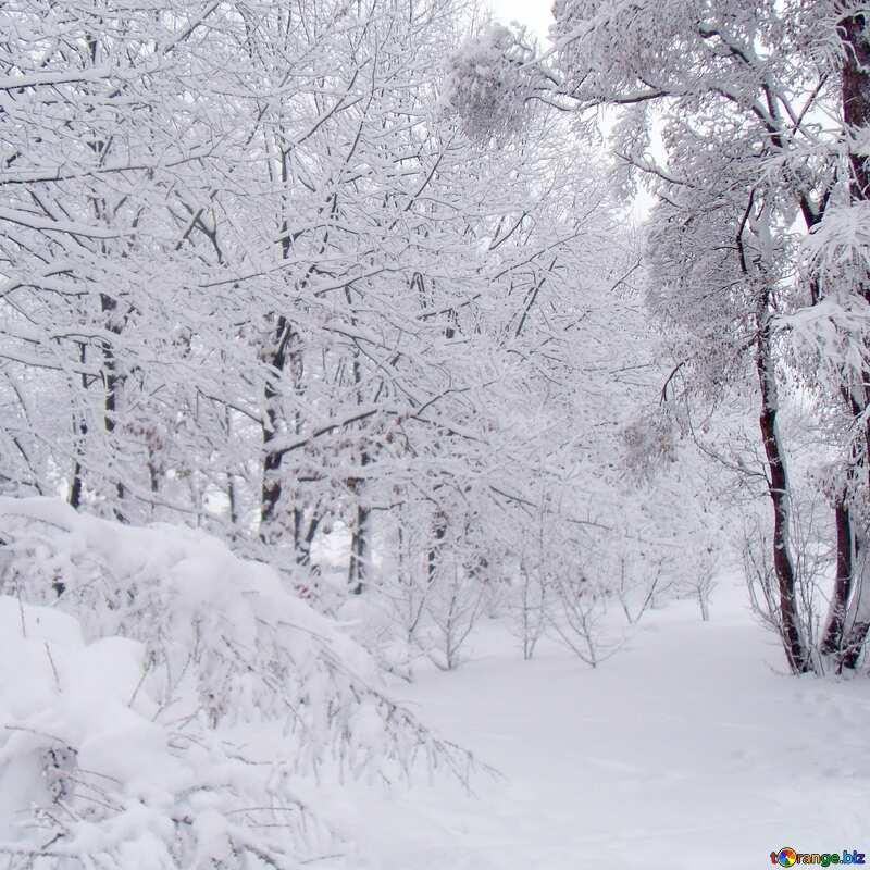 Wald im Schnee №10536