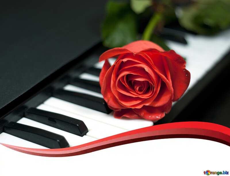 rose musical №7198