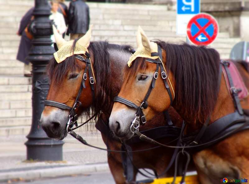 Two horse  №11716