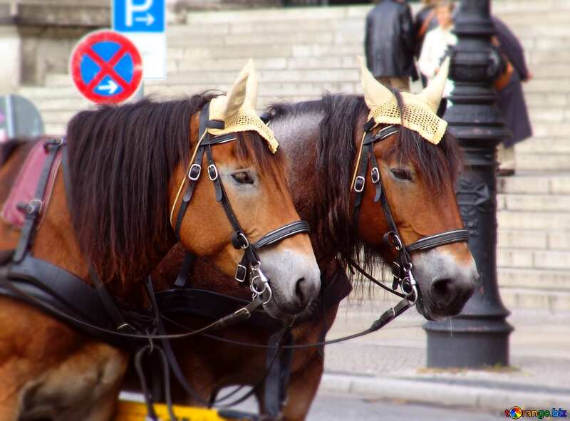 Two horses №11716