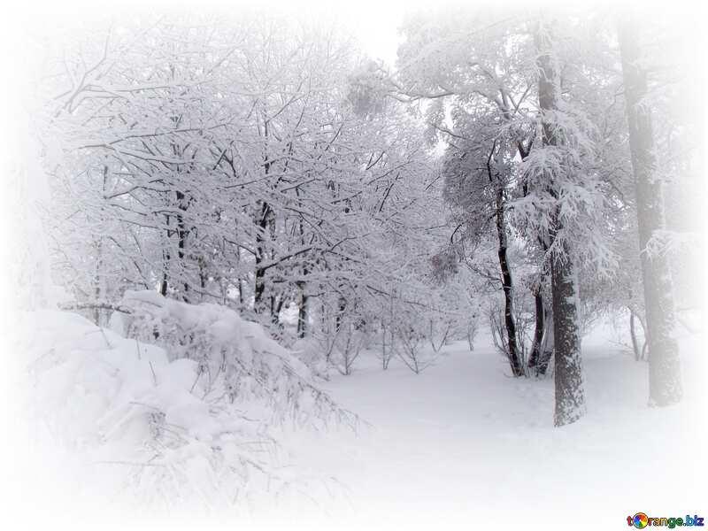 snowy forest white frame around №10536
