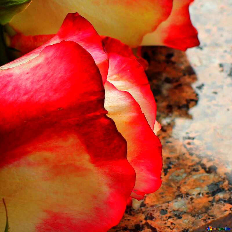 rest rose on granite plate №22833