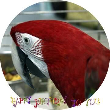 Die Wirkung der Spiegel. Das Bild in einem kreisförmigen Rahmen. Postkarte Alles Gute zum Geburtstag in Englisch.