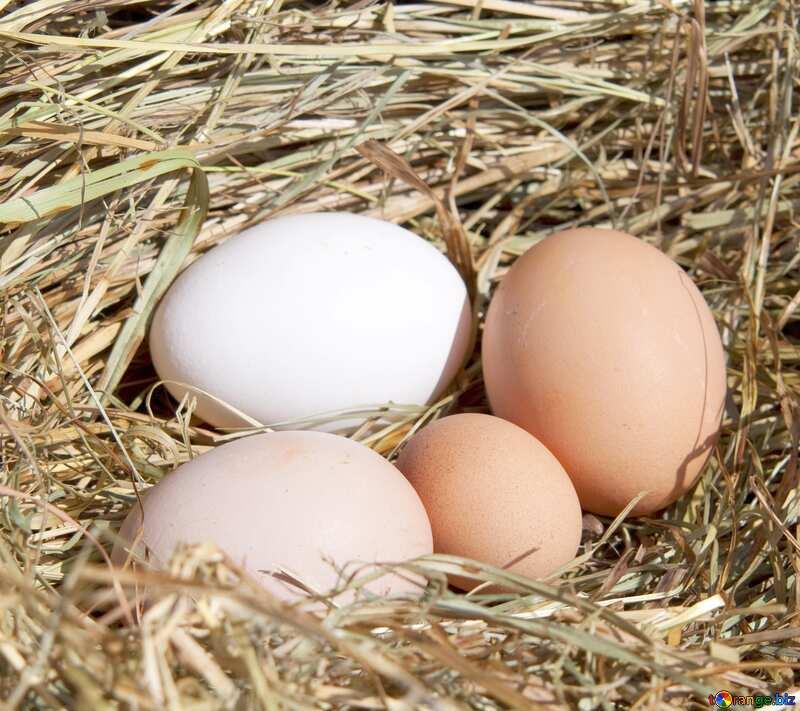 nest eggs №1069