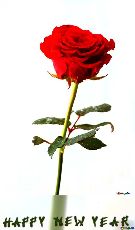 Elegant Rose happy new year №17038