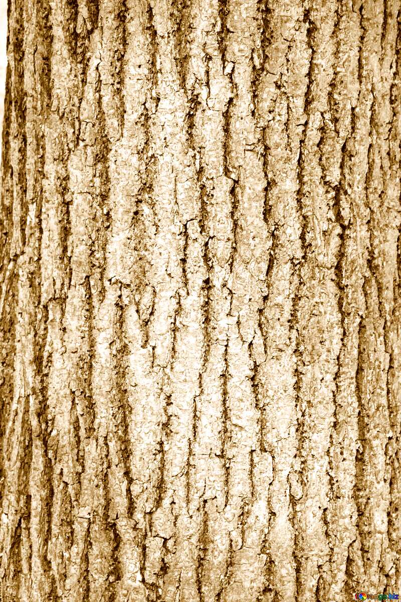 Deciduous bark texture №849