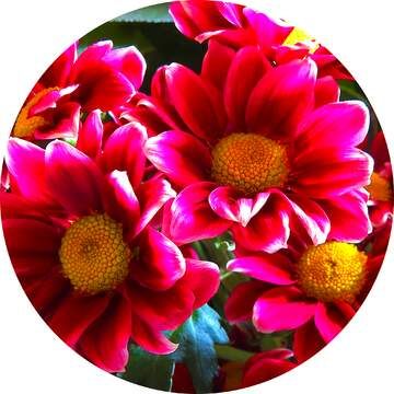 The effect of the mirror. The effect of contrast. Very Vivid Colours. Frame circle.