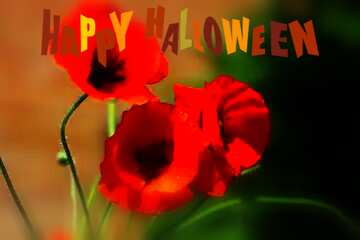 The effect of the mirror. The effect of the dark. Very Vivid Colours. The effect of macro blurring the top and bottom. Happy halloween.