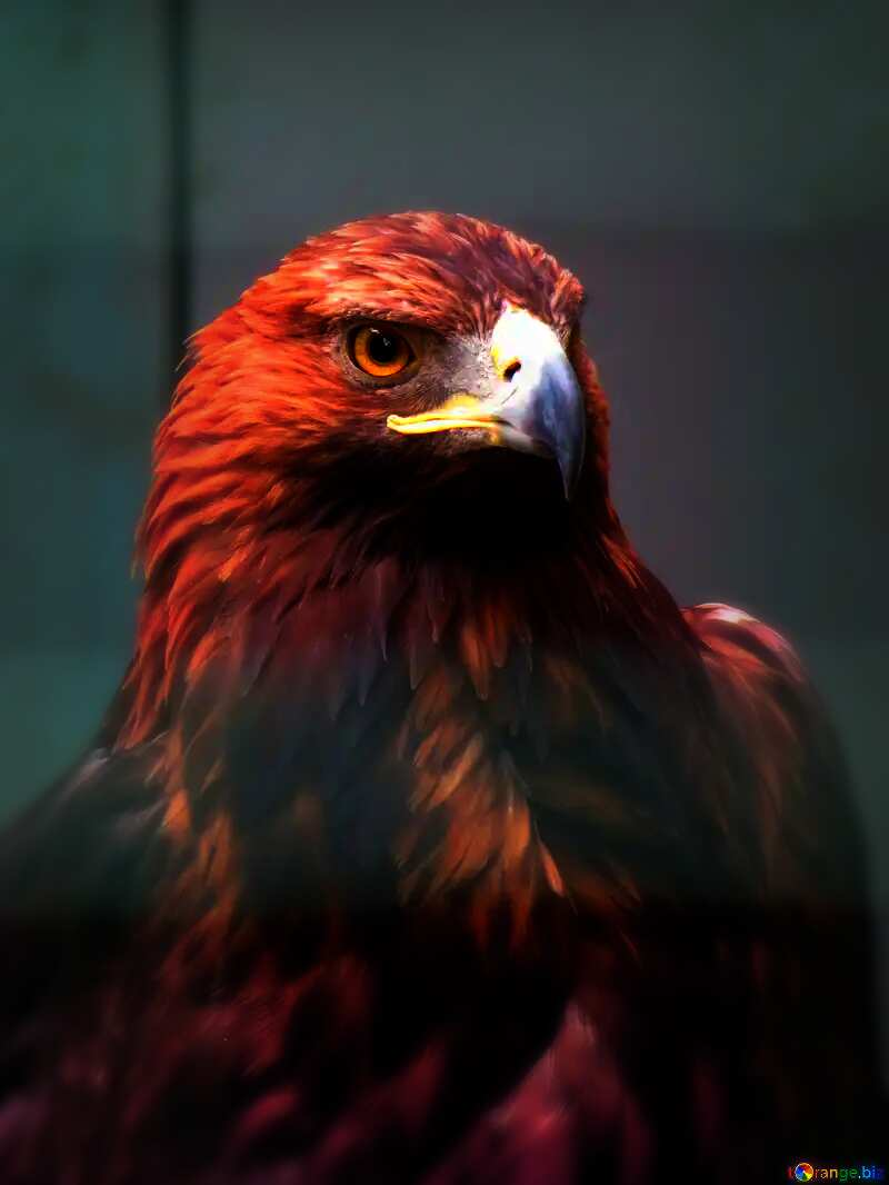 red eagle №45229
