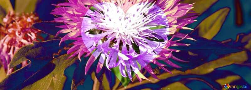 Cornflower in crystal heart №3248
