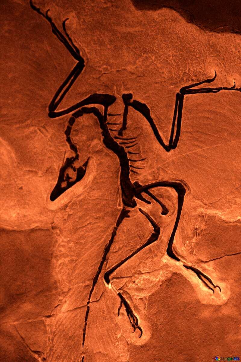 Skeleton animal in stones №39357