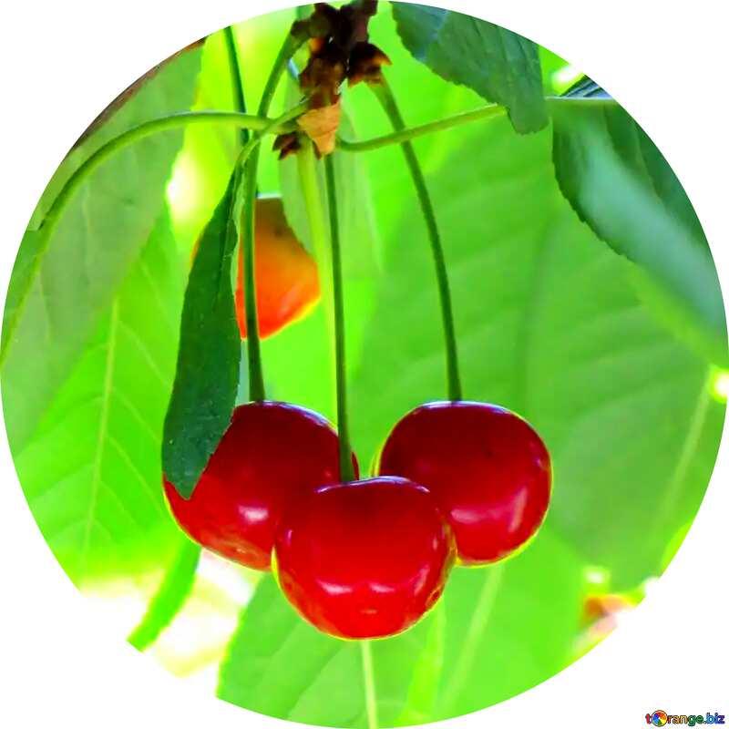 Cherries circle frame №25965