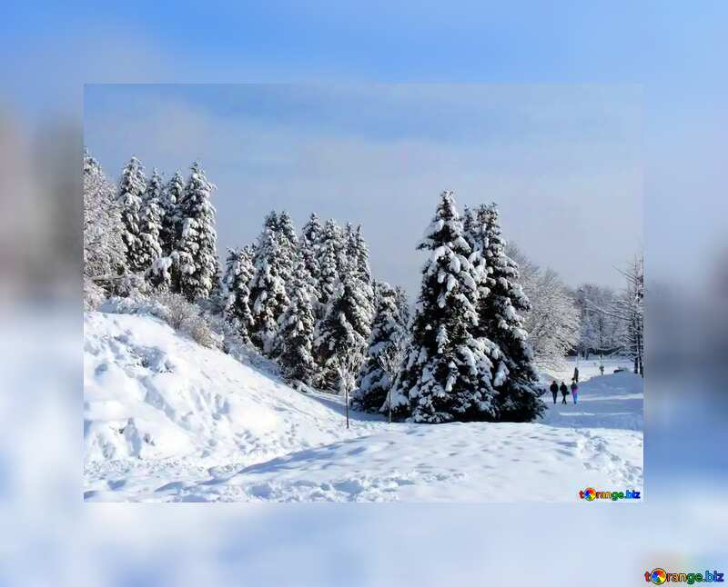 A tree on a snow covered hill №10526