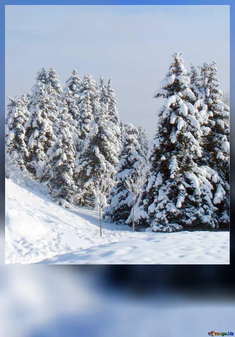 Tree winter card №10526