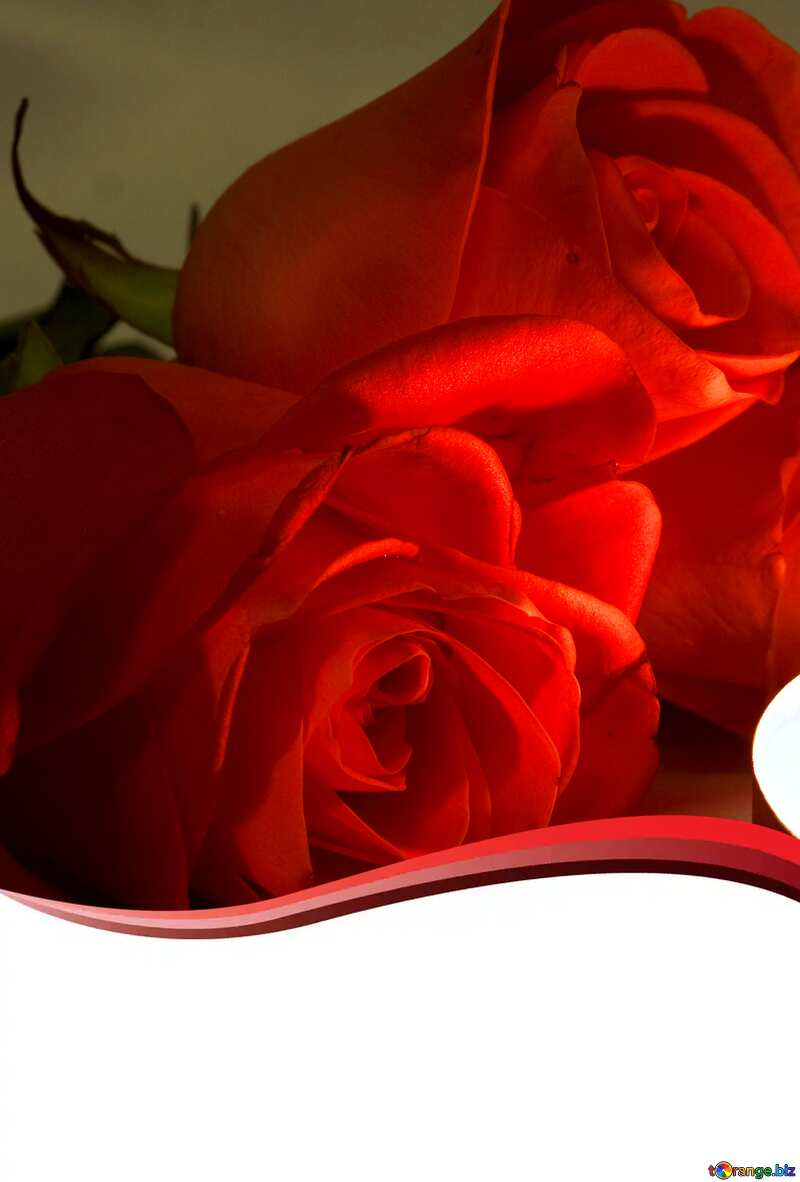 red curved romantic background №7276